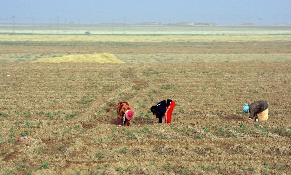 Women working in fields in northeastern Syria in 2010. Photo: Louai Beshara, Agence France-Presse