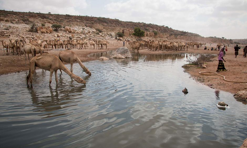 The diminishing stream at Dhudi, Bandar Bayla district in eastern Puntland. It is currently the only running water source within a 75km radius. Photo: Ashley Hamer, Al Jazeera