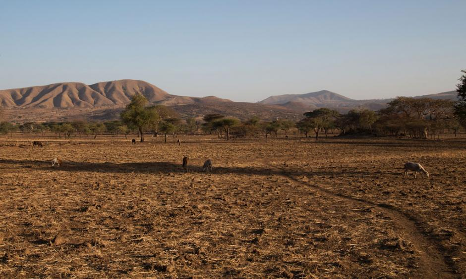 Drought associated with the El Niño phenomenon has severely affected Arsi, Ethiopia. Photo: OCHA/Charlotte Cans