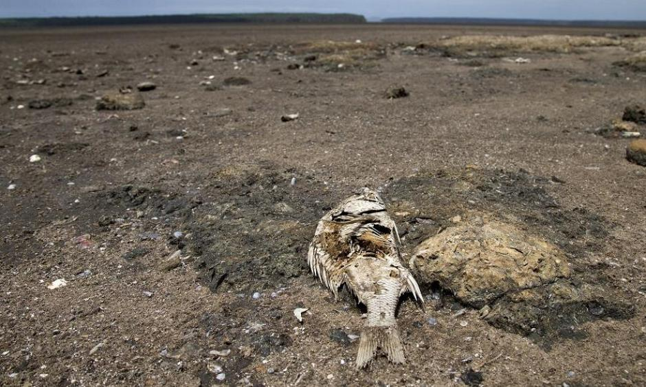 Drought. Photo: africanews