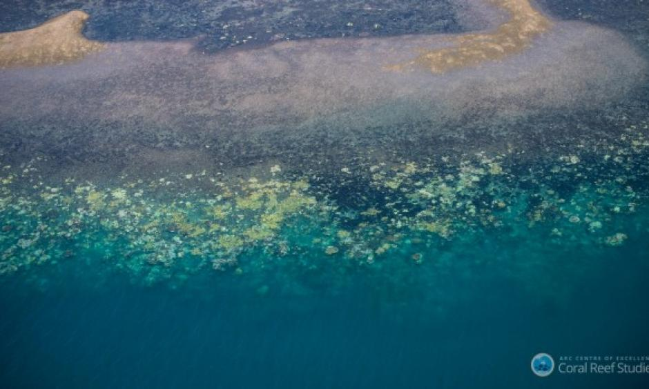 The National Coral Bleaching Taskforce has found record levels of bleaching on the Great Barrier Reef. Photo: Terry Hughes