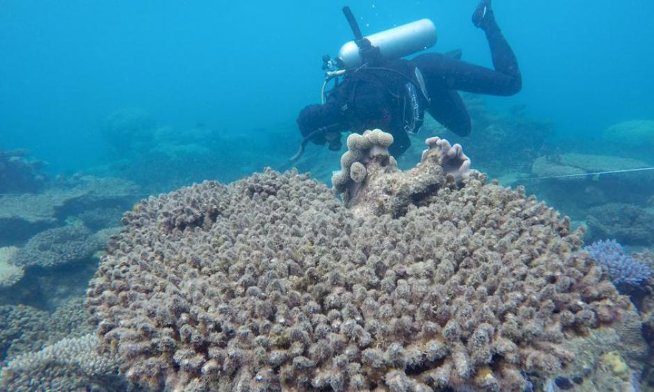 A researcher from the ARC Centre of Excellence for Coral Reef Studies surveys the bleached/dead corals at Zenith Reef, in November 2016. Photo: Andreas Dietzel