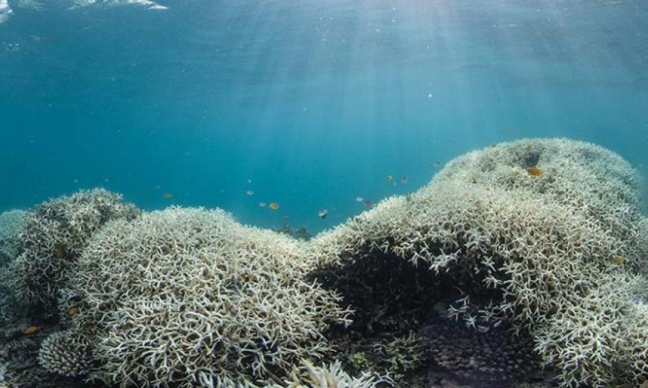 Dramatic coral bleaching, seen in Australia's Great Barrier Reef from March 2016. Photo: CNN