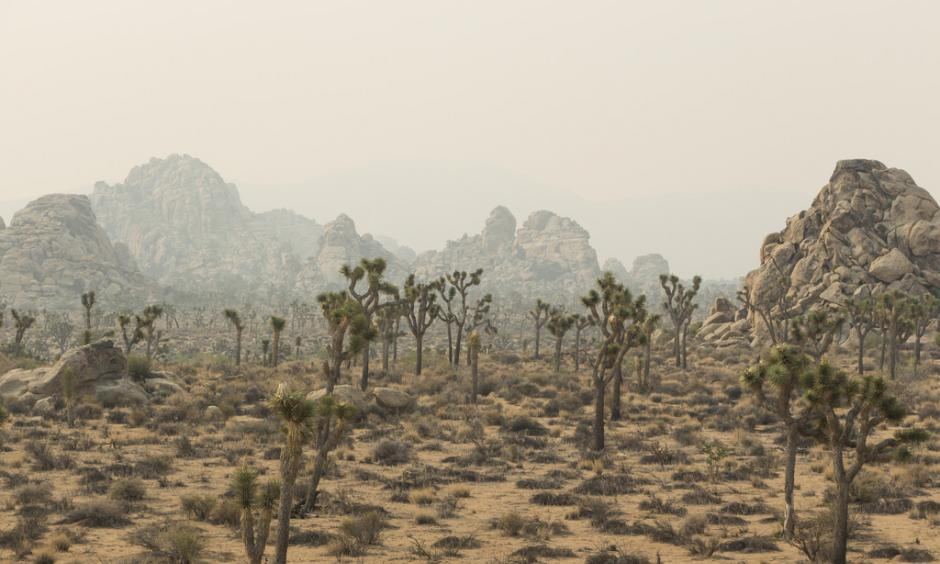 Smoke from the June 2015 Lake Fire in Joshua Tree National Park. Photo: Brad Sutton, NPS