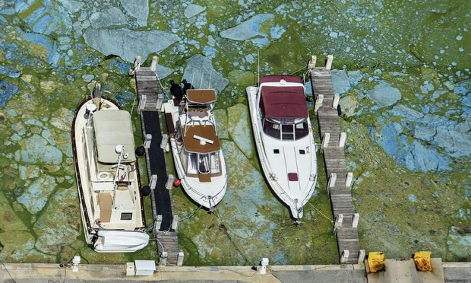 Boats docked at Central Marina in Stuart, Florida, are surrounded by blue green algae Wednesday. Photo: Greg Lovett / AP