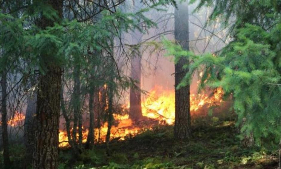 Whitewater Fire. Photo: Willamette National Forest