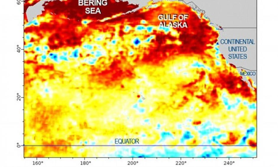 A blob of warm water 2 000 miles across is sitting in the Pacific. Photo:  NOAA, NCDC