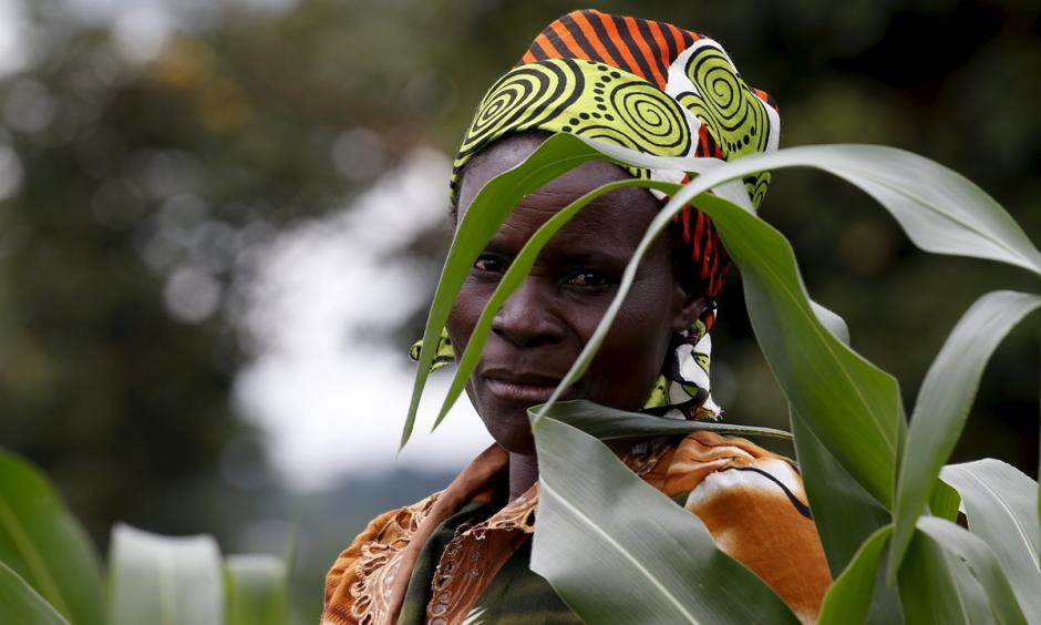 A farmer surveys her maize fields in Dowa, near the Malawi capital of Lilongwe, earlier this month. The country is experiencing its first maize shortage in a decade, causing prices to soar. Photo: Mike Hutchings, Reuters