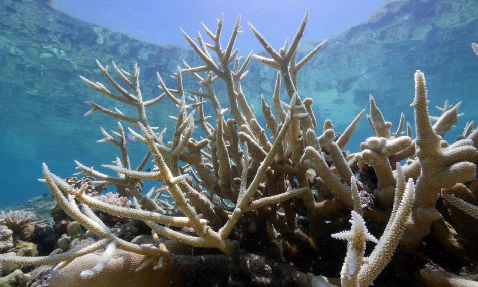 Coral bleaching. Photo: The Guardian