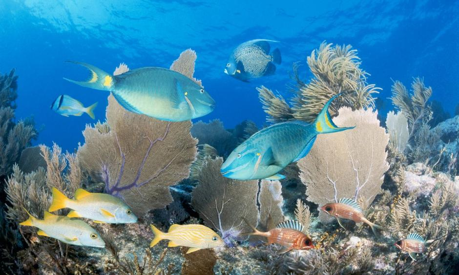 Florida's reef is home to 100 coral species and more than 400 fish species. Photo: Jeff Hunter, Getty Images