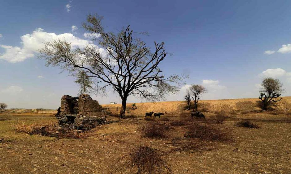 Scorched land on the outskirts of Jaipur, Rajasthan. The desert state recorded India's hottest ever temperature of 51C on 19 May. Photo: Guardian