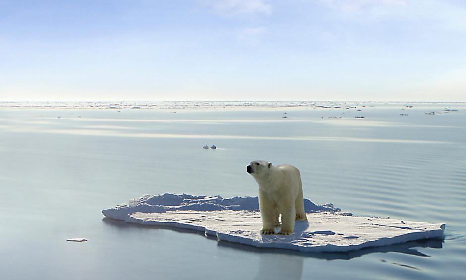 A polar bear managed to get on one of the last ice floes floating in the Arctic sea. Credit: Gerard Van der Leun, Flickr