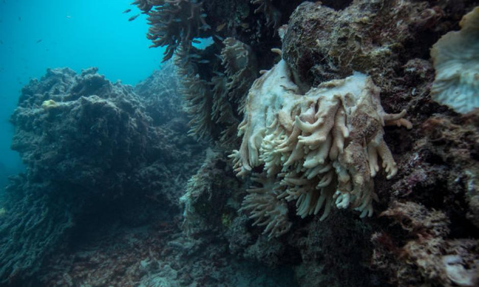 Soft coral decomposing and falling off the reef, captured by the XL Catlin Seaview Survey at Lizard Island on the Great Barrier Reef in May 2016. Photo: Catlin Seaview Survey