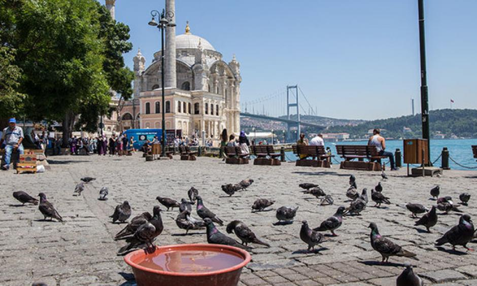 Pigeons gather near a bowl filled with water to cool off at Ortaköy Square, with Istanbul landmarks Grand Mecidiye Mosque and July 15 Martyrs Bridge (Bosporus Bridge) in the background, on June 30, 2017. Photo: Sabah, Kübra Usta