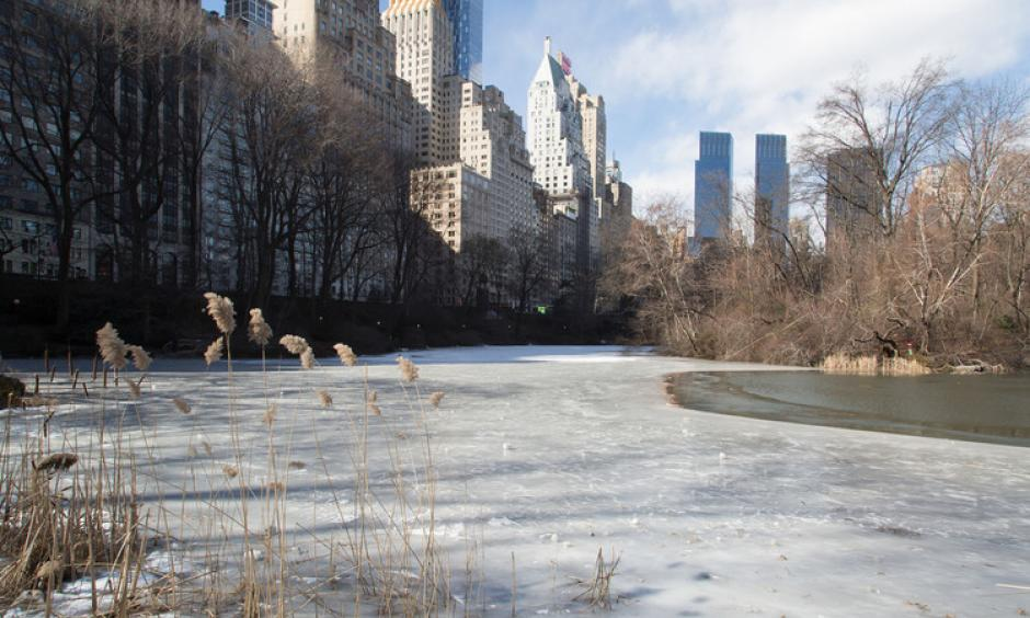 A lake freezes over in Central Park on Feb. 13. Photo: Pacific Press, LightRocket via Getty Images