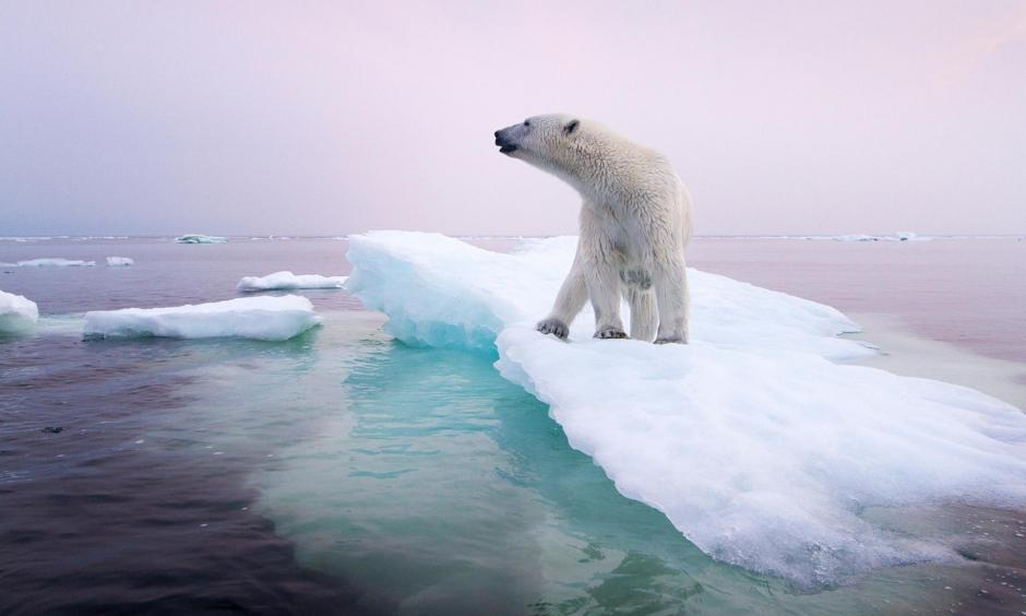 A polar bear stands on an ice floe near Manitoba, Canada, in 2012. Polar bears depend on sea ice, which is forming later in the fall and disappearing earlier in the spring. Photo: Paul Souders, Corbis