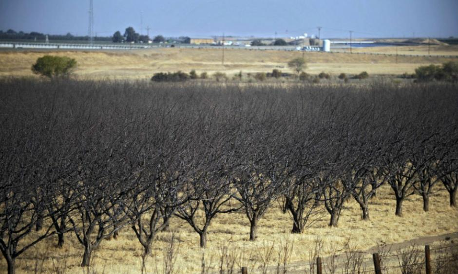 Near-dead crops in California's drought-stricken Westland Water District of the Central Valley in 2009. The state continues its water usage restrictions as the summer heat sets in. Photo: Russel Daniels, AP