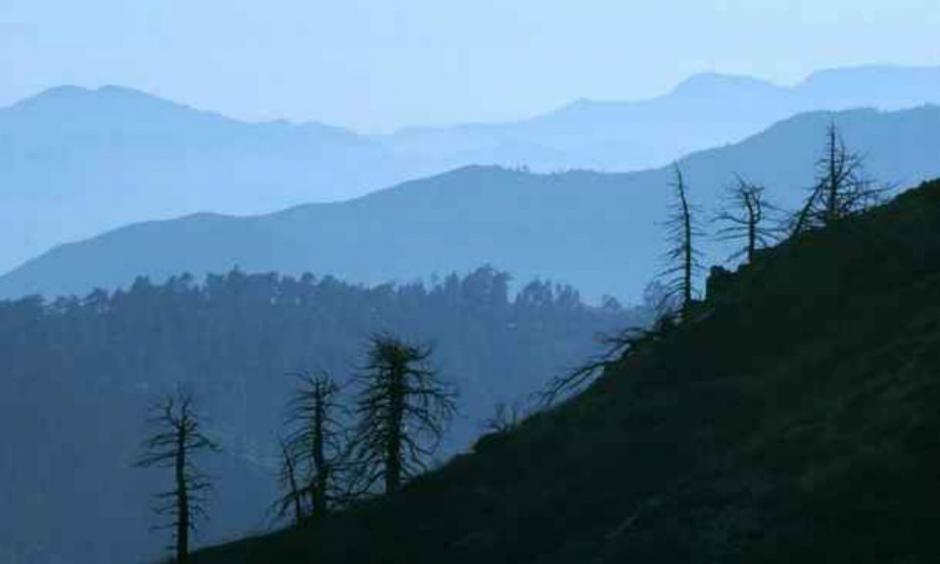 A view of the Angeles National Forest. The governor has declared a state of emergency because of dead trees that pose a fire hazard and a potential mudslide and debris concern during El Nino storms. The state estimates 22 million dead trees and millions more to follow due to the four-year drought. (Staff file photo/Los Angeles News Group)