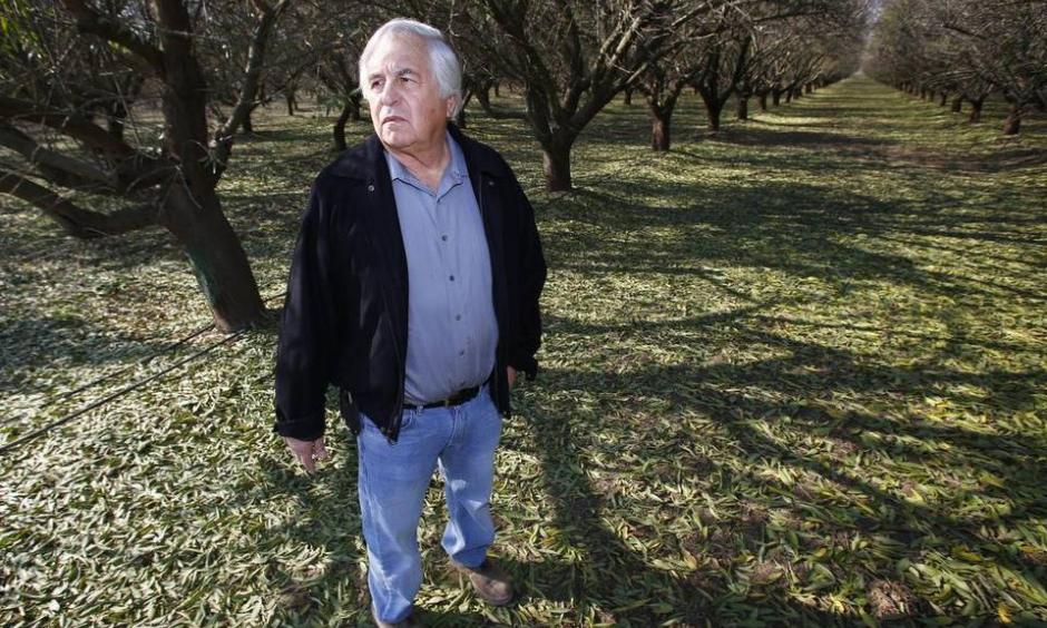 Farmer George Goshgarian farms an almond orchard where he's been actively applying water to the trees to help recharge the aquifer Thursday, Nov. 19, 2015 in Fresno, Calif. The almond industry, along with UC scientists, are studying how to increase groundwater recharge through open field flooding. Gary Kazanjian