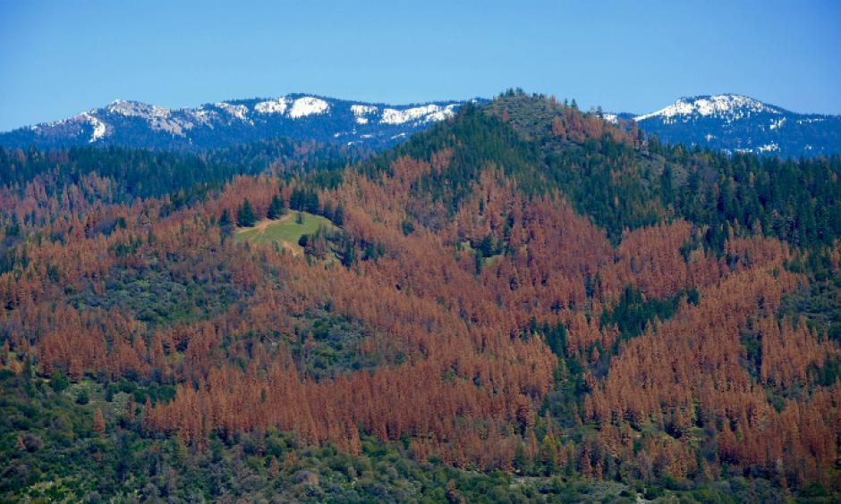 The U.S. Forest Service's aerial survey team estimates tree mortality in California by flying over the forests and observing the canopy's texture and color. Photo: USDA
