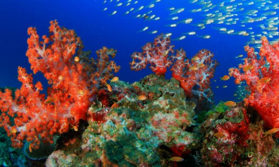 Coral bleaching. Photo: Rich Carey,Shutterstock