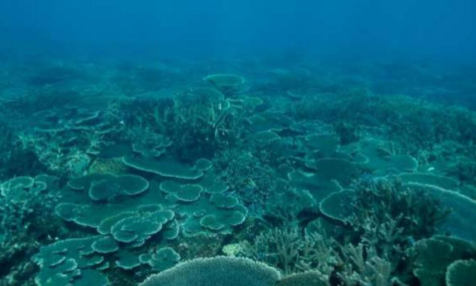 The Abrolhos Islands off Geraldton harbour a wonderworld of corals at risk from climate change. Photo: Marine Ecology and Monitoring Section, Department of Fisheries.