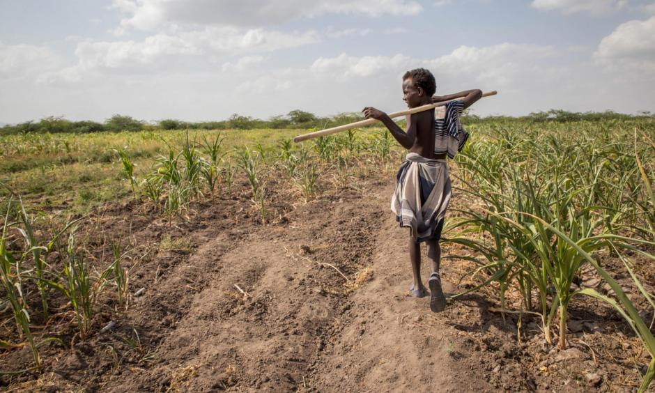 A young Afar boy walks through failed crops and farmland in Magenta area of Afar, Ethiopia. Morbid thoughts linger on people's minds in the area. The crops have failed and farm animals have been dying amid severe drought that has left Ethiopia appealing for international help to feed its people. Photo: Mulugeta Ayene, AP