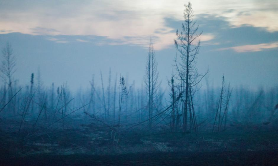 Charred trees near Fort McMurray, in Alberta, Canada. Climate change is a prime suspect in a rise of wildfires in the boreal forest. Photo: Ian Willms, The New York Times