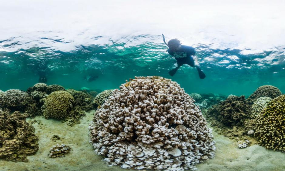 A marine biologist inspects a heavily bleached coral in Kaneohe Bay, Hawaii in October 2014. Image: XL CATLIN SEAVIEW SURVEY