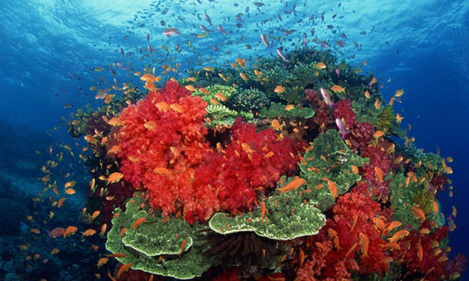 Coral bleaching. Credit: Thinkstock