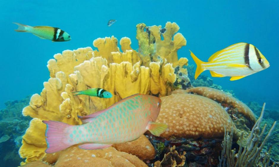 Coral reefs worldwide are facing a mass bleaching event due to high ocean temperatures, says Noaa. Photograph: Alamy