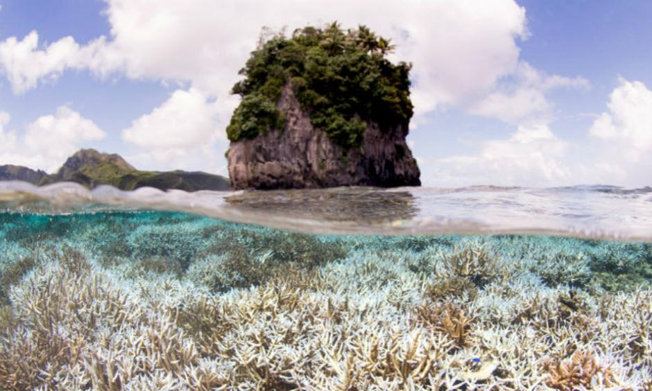 Bleached coral in American Samoa earlier this year. Photo: Catlin Seaview Survey