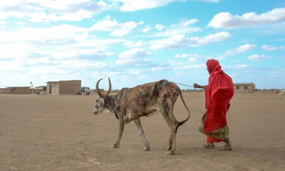 Drought conditions have killed livestock in Ethiopia as the country enters a humanitarian crisis Photo: Abiy Getahun, Oxfam)
