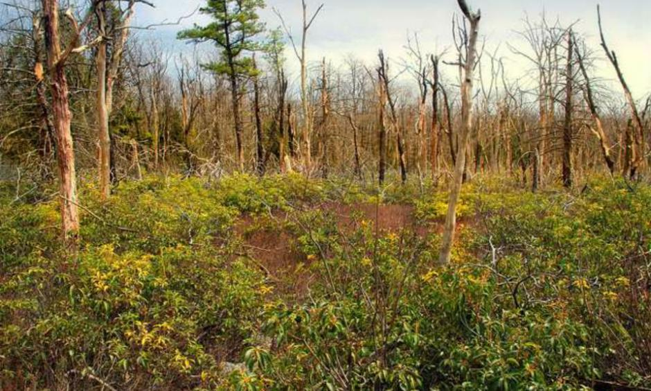 Diverse meadow post fire in Bald Eagle State Forest. Credit: Nicholas A. Tonelli creative commons license