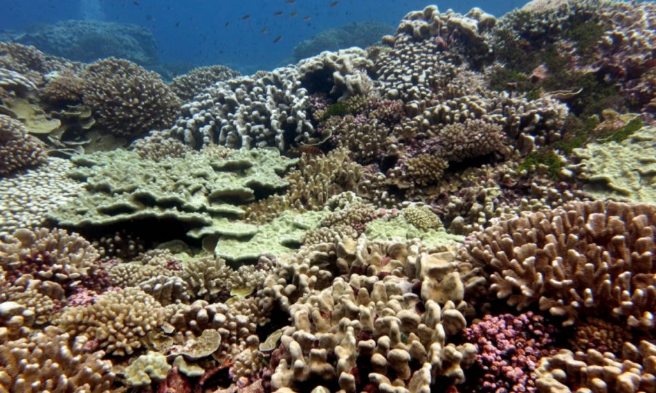A pristine coral reef near the remote Millennium Atoll in the central Pacific. Photo: Jennifer Smith