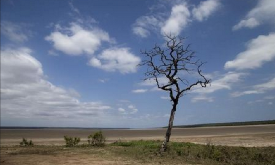 Lake St Lucia is almost completely dry due to drought conditions in the iSimangaliso Wetland Park, northeast of Durban, South Africa February 25, 2016. Photo: Rogan Ward, Reuters