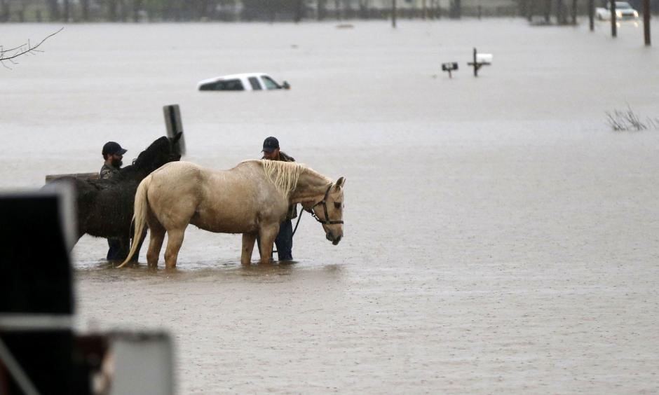 Two men secure two horses in rising floodwaters as a Bossier Parish Sheriff truck passes in Bossier Parish, La., Thursday, March 10, 2016. Photo: Gerald Herbert/Associated Press