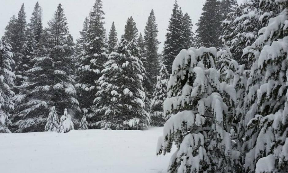 The second snowpack measurement of the winter Feb. 2 was 130 percent of average at Phillips Station off Highway 50 near Sierra-at-Tahoe Road. Photo: California Department of Water Resources
