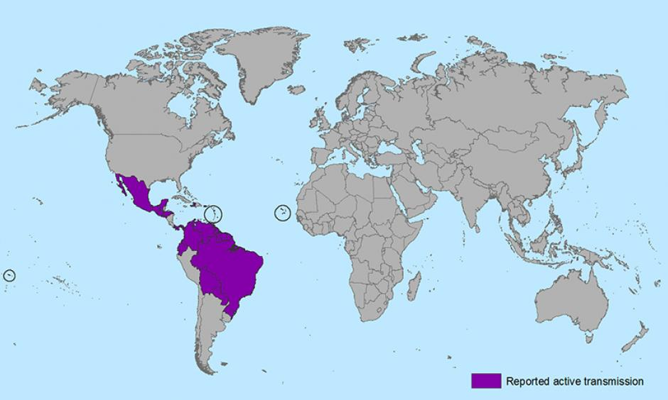 Zika transmission. Photo: Wiki Commons