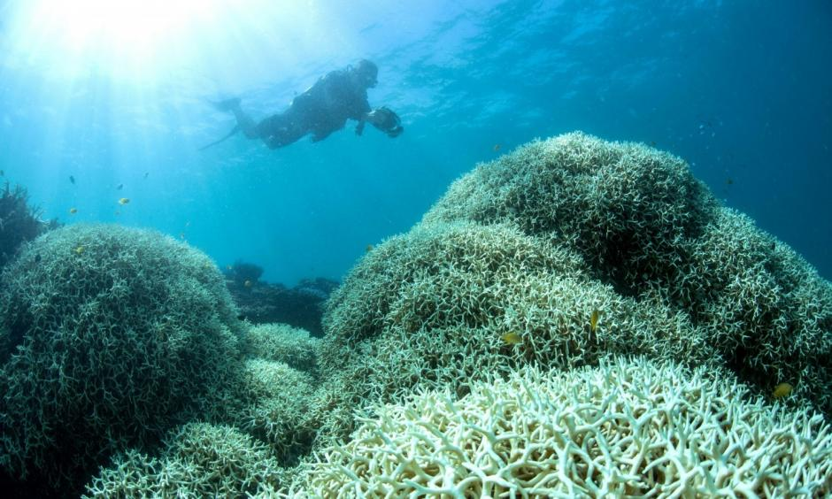A diver films a reef affected by bleaching off Lizard Island in the Great Barrier Reef. Image: XL Catlin Seaview Survey via AFP, Getty Images
