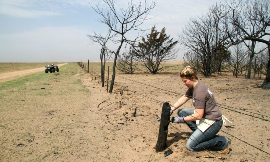 In this March 22, 2017 file photo, Kansas State student Reagan Butler and others from a Manhattan youth group help remove damaged fencing over thousands of acres in fire-ravaged Clark County, Ark. The Western mountains are flush with snow and California has canceled its drought emergency, but some farmers and ranchers on the high plains are struggling amid a lengthy dry spell and the aftermath of destructive wildfires. Photo: Michael Pearce, The Wichita Eagle via AP