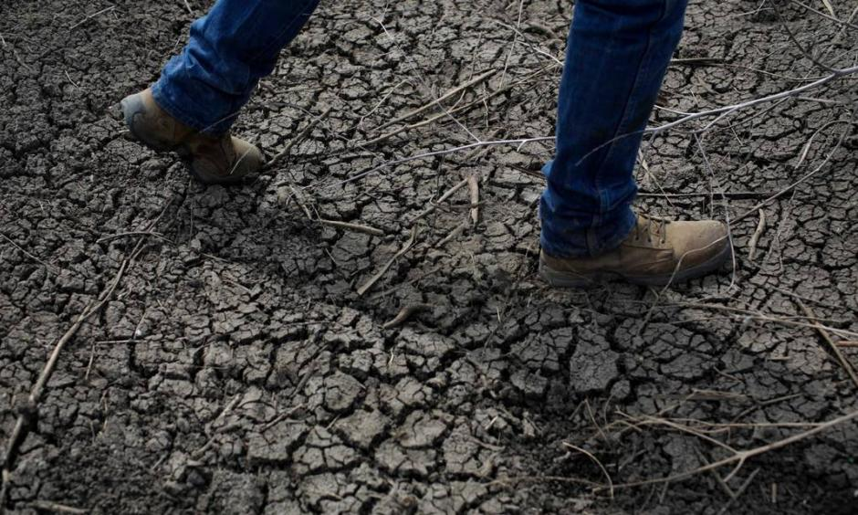 A dried-up ditch at a rice farm in Richvale, California. Credit: JAE C. HONG