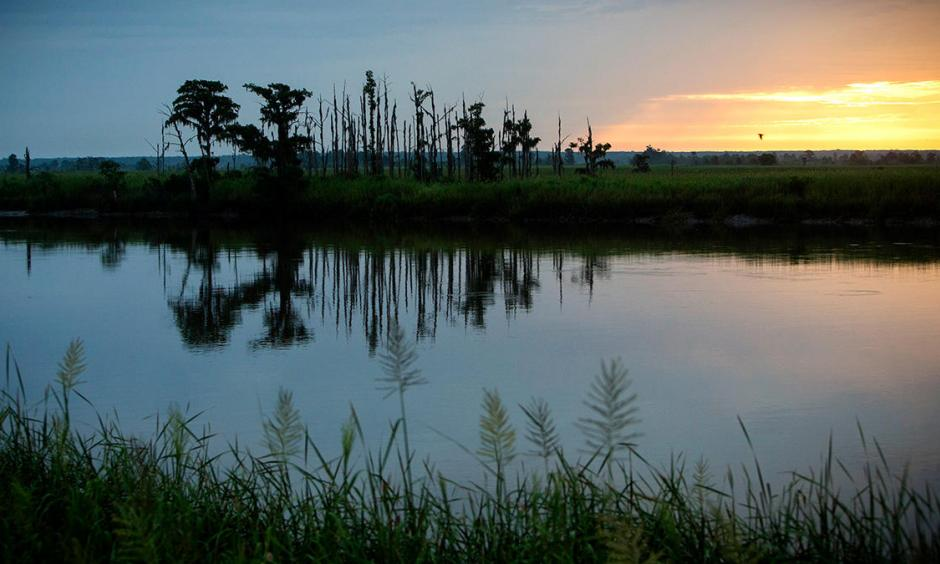 "In this July 16, 2017, photo, the sun rises on a ""ghost forest"" near the Savannah River in Port Wentworth, Ga. Rising sea levels are killing trees along vast swaths of the North American coast by inundating them in salt water. Photo: Stephen V. Morton, AP"