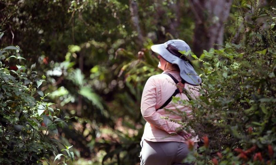 Sue Farnsworth searches for butterflies in south Miami-Dade County last month during the North American Butterfly Association's annual butterfly count, the longest and largest count of butterflies in the world. Photo: Roberto Koltun