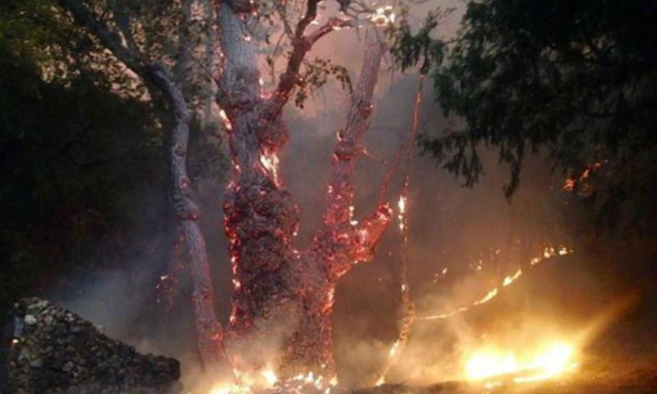 The fast-moving Butte Fire burning in Amador and Calaveras counties has gotten away from firefighters and continues to rip through thousands of acres of trees and dry brush amid multiple days of triple-digit temperatures. (Sept. 10, 2015) Claire Doan/KCRA