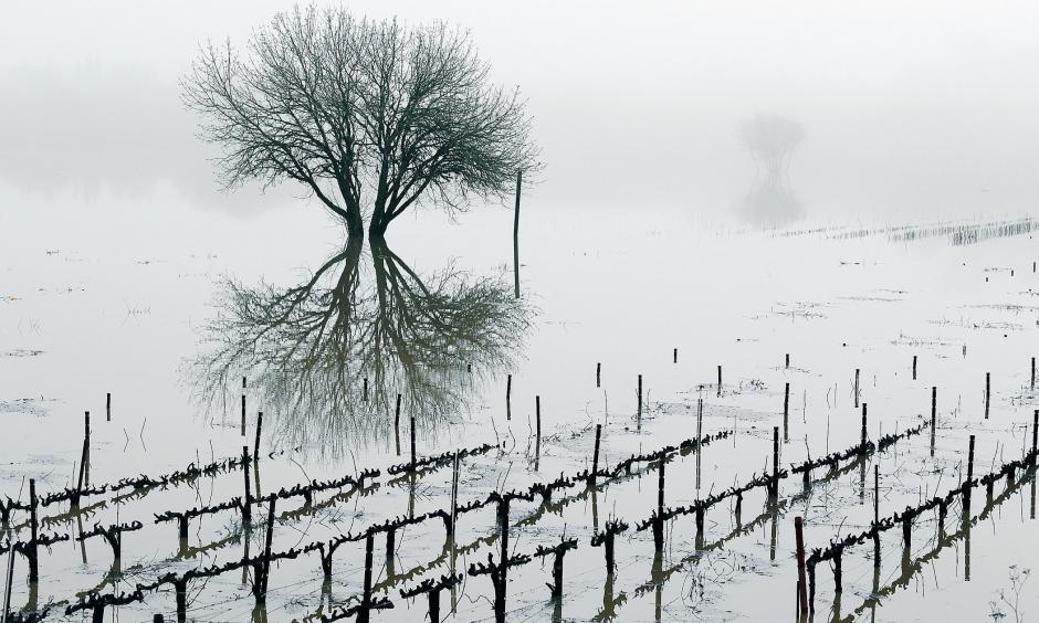 A flooded vineyard in the Russian River valley in Forestville, California, on January 9, 2017. Photo: Eric Risberg, AP