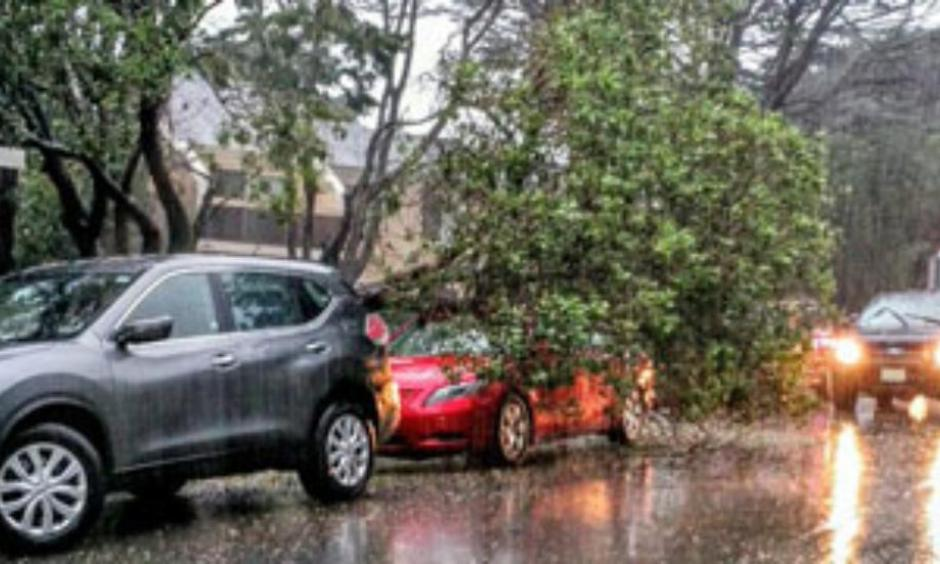 A combination of harsh wind and heavy rain knocks a tree onto a Pacifica, California vehicle. Photo: Michael O'Brien, Twitter