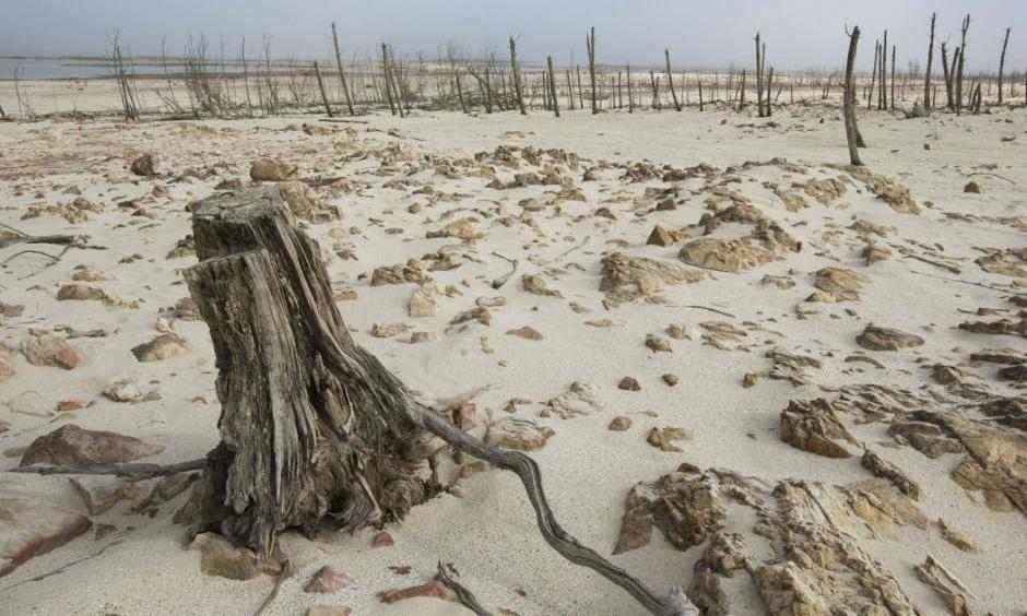 Dead trees sit inside the Theewaterskloof dam in Cape Town. Photo: Mother Jones