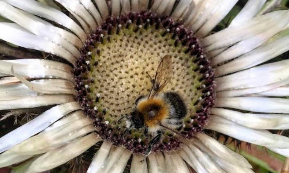 Bees are being threatened by extreme heat from climate change