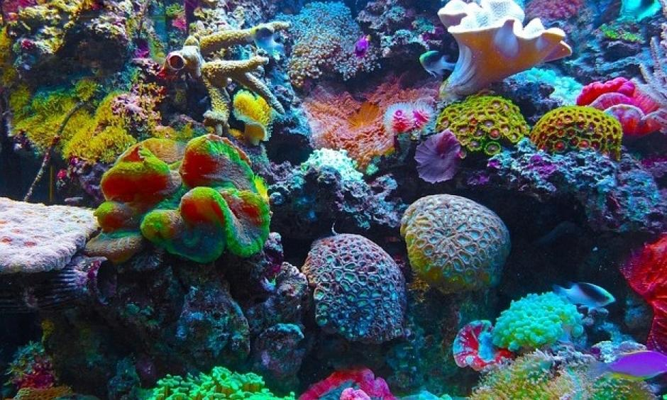Scientists warn of one of the biggest coral reef die-offs in history, due to the climate change effect of El Niño. Photo: Twitter, Joseph_Causes